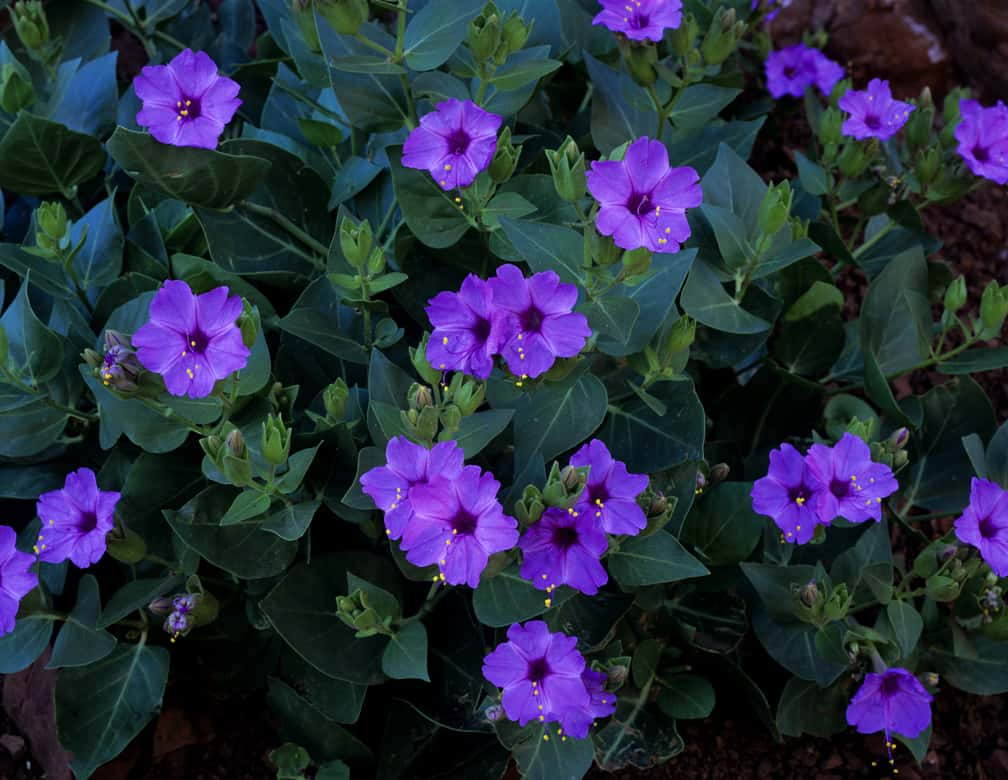 Lovely Flowers Which Bloom Only At Night