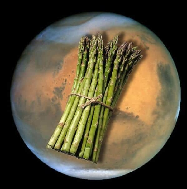 Mars would make an ideal environment for asparagus and turnip growing