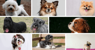 Top 10 Best Small Dog Breeds for Kids